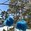 Thumbnail:  Plaid delica & fur pom dangles by Janelle Hager