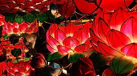 lotus chinesa.jpg