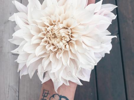 Fleurs de fleuriste .... les DAHLIAS