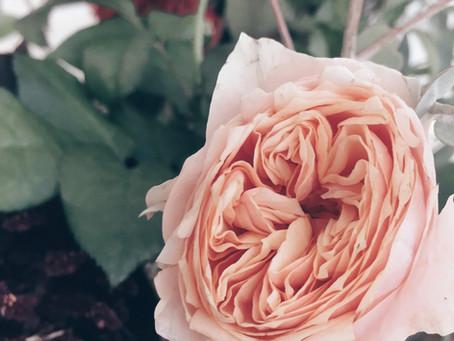 Fleurs de fleuriste .... La Rose VUVUZELA