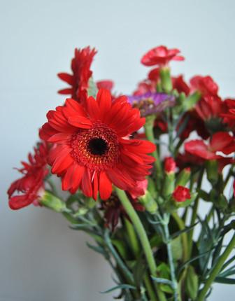 Gerbera _ Une fleur dans la boite