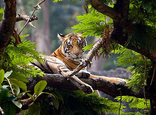 Thekkady wild life most important tourism Hill station , Thekkady tourism tempo traveller for rental , Thekkady night safary fo Tempo traveller