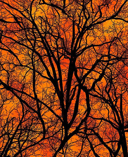 Halloween tree, orange