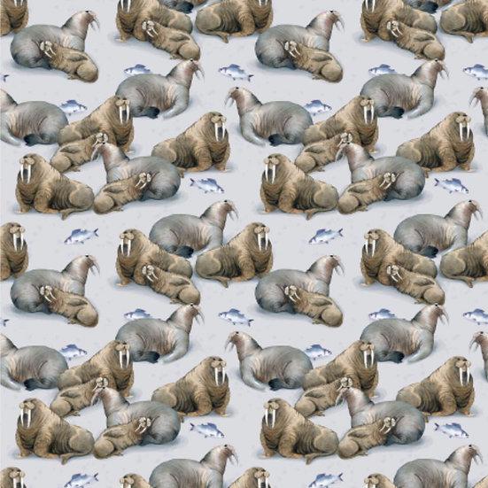 1.19-28 Walrus family
