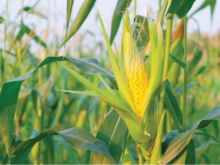 Grains & Livestock Commentary