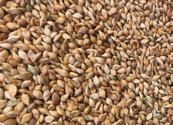 Brown Top Millet, Naturally Grown, 250 gms