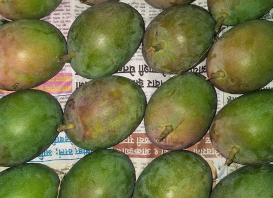 Naturally ripened, carbide free Mangoes, 2 Dozen