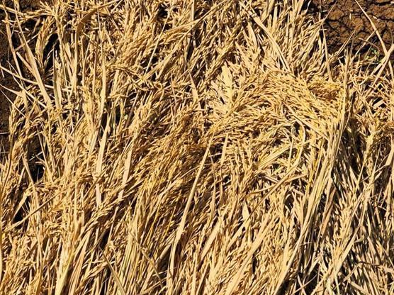 Harvested!.jpg