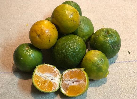 Oranges Nagpur - 100% Natural (ZBNF/SPNF)