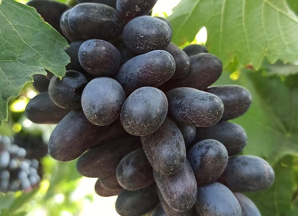 Black Grapes 🍇 100% Naturally Grown (10kgs) 2kgs * 5 boxes