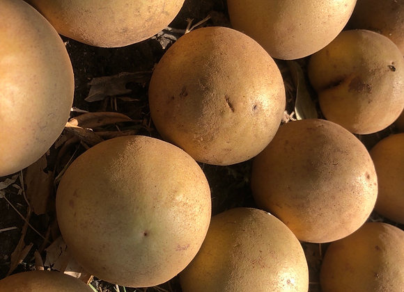 Sapota (Chikku) 100 % Naturally Grown- 1 kg