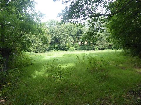 Crowhurst Meadow.JPG