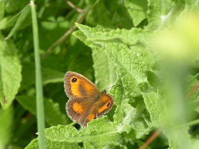 Crowhurst - Butterfly.JPG