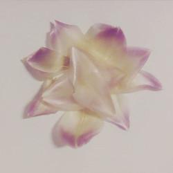 #ilovefood_#artichoke #petals #lotus #so