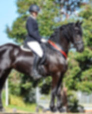 nirrelle somerville friesian horse dressage showing lessons