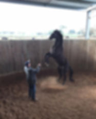 horse liberty training rearing