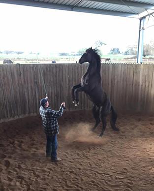 slide-2-liberty-horse-training.jpg
