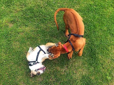 Paddington Recreation ground dog walk