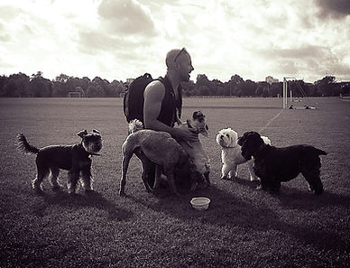 Dog Walker Maida Vale London