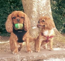 Yogi and Bugsy