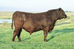 RATHBUN TIMELESS A551 F314
