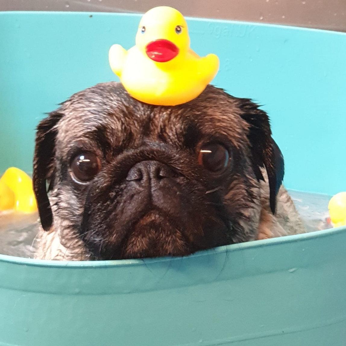 SPA/Wellness Bubble Bath