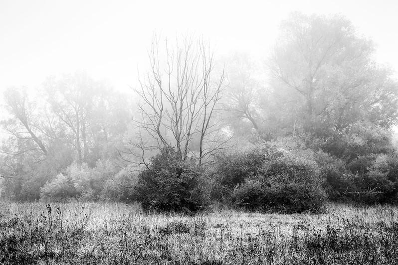 Naturschutzgebiet im Hegau