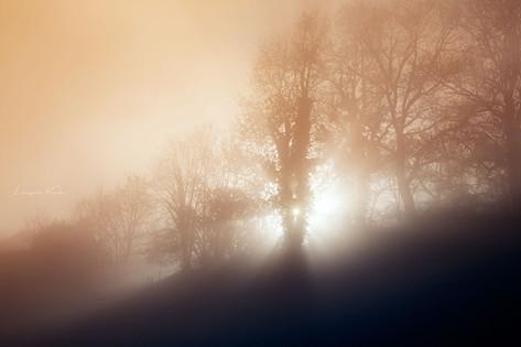 Sonne gegen Nebel