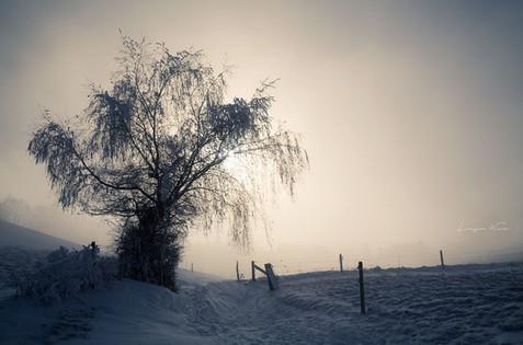Feldweg im Nebel
