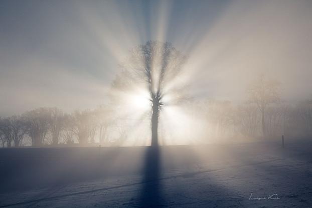Nebel- und Sonnenstrahlen