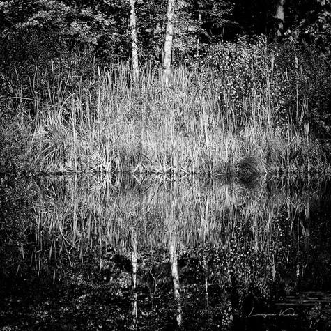 Spiegelung im Teich