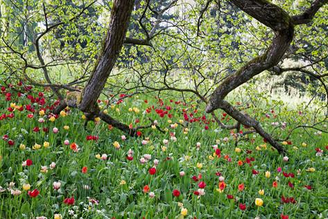 Im Blumenfeld