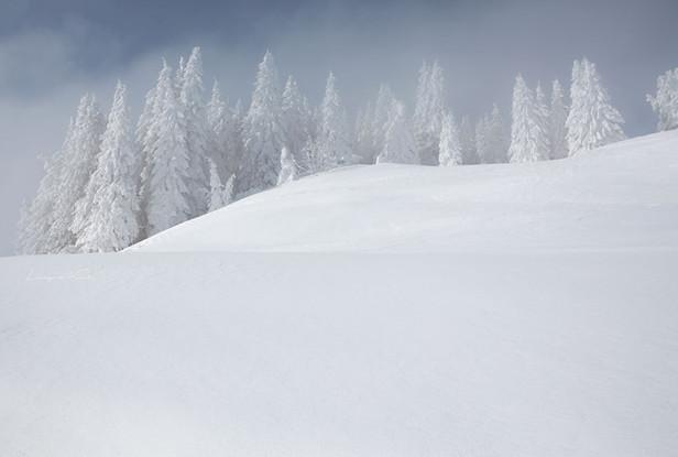 Winterlandschaft im Nebel