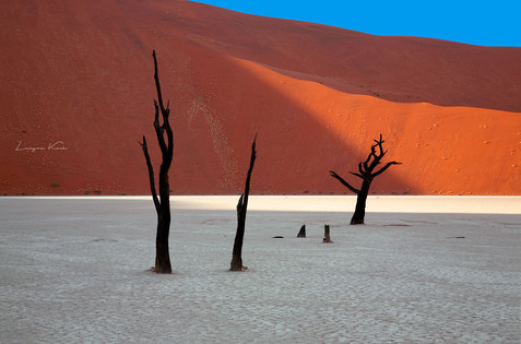 Bäume in Deadvlei