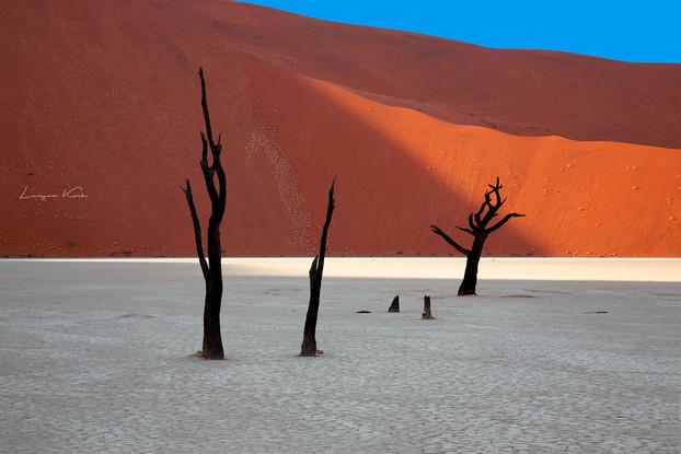 Bäume in Deadvlei