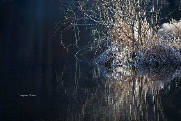 Frühling am Teich  (Deutschland)