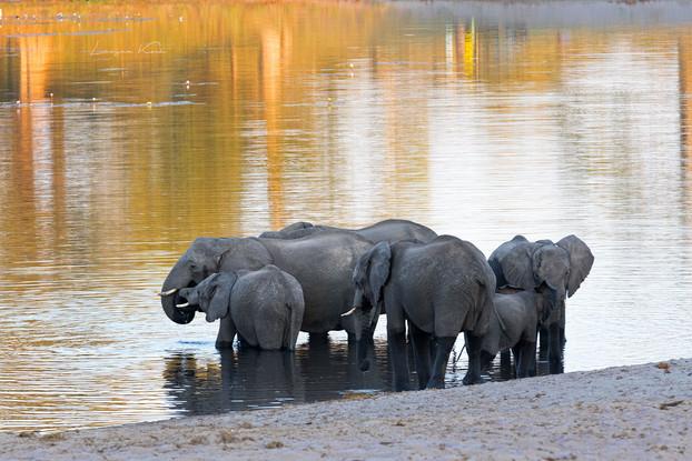 Elefanten am Kwando River
