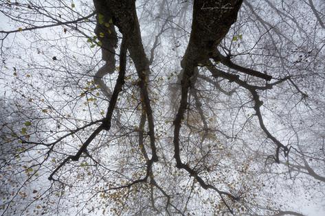 Baumkronen im Nebel