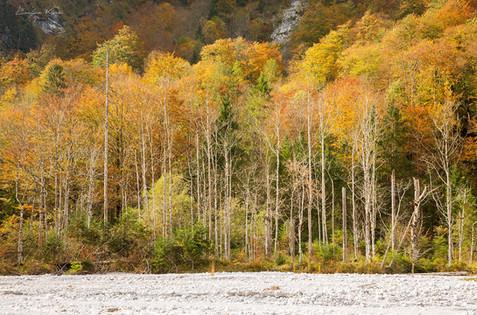 Herbstliche Bäume
