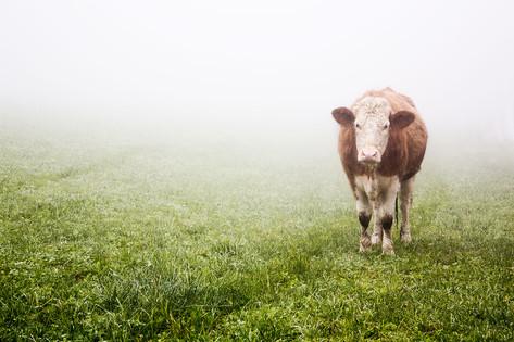 Weide im Nebel