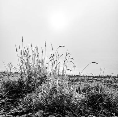 Gräser am Ufer