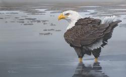 "Eagle 30""x48"" SOLD"