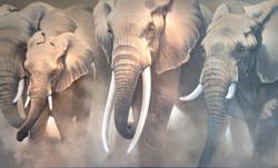 "Elephants 36""x60"" $8,600"