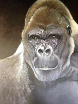 Gorilla SOLD