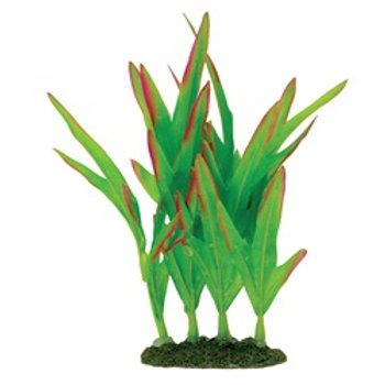 Plante Naturals Marina en soie, verte 5-6po