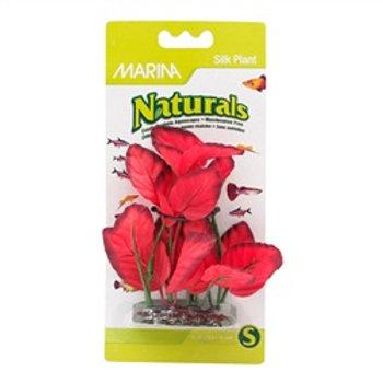 Plante Naturals Marina en soie, rouge (5-6 po)