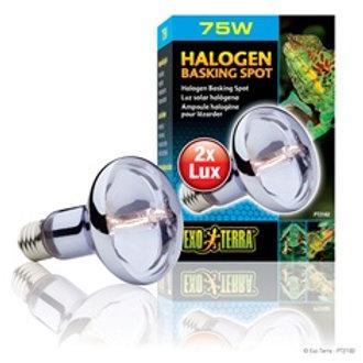 Ampoule halogène pour lézarder 75W ExoTerra 2x LUX