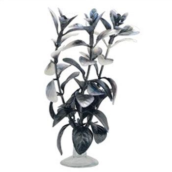 Ludwigia noire pour aquarium Marina pour betta (5 po)