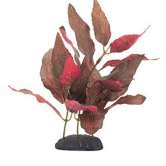 Alternanthera cardinalis EcoScaper Marina en soie