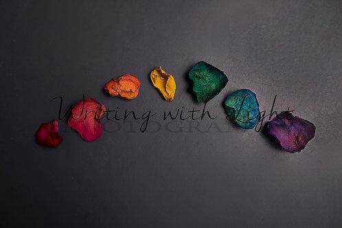 Grey rainbow petals